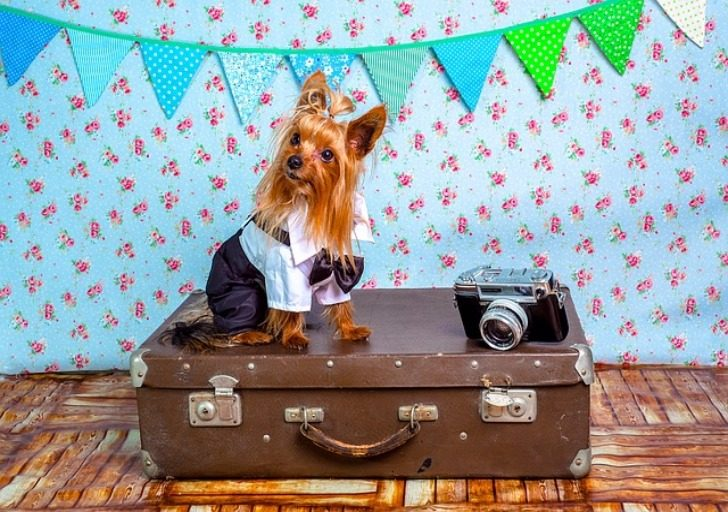 Nine Rules for Traveling with Pets