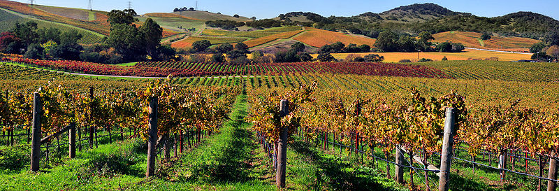 Napa Valley: By Brocken Inaglory (Own work) [CC-BY-SA-3.0 (http://creativecommons.org)