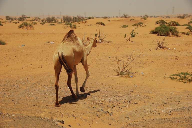 Desert Tours and Fascinating Adventures